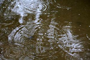 Flood Water Testing