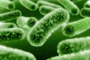 Bacterial Testing
