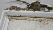 Mold / Fungus Training